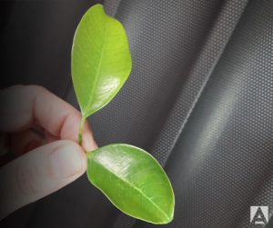 Protección del medio ambiente